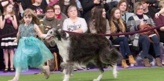 Dog An Animal of High Glory
