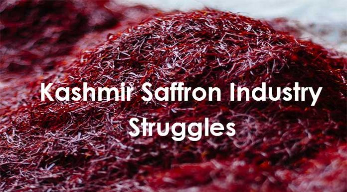 Kashmir's Saffron Industry Struggles to Stay in the Market