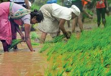 After decades, the same problem of farmers, what is the analysis of the crop of farmers?