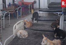 Dogs rest on beds of patients in Bihar