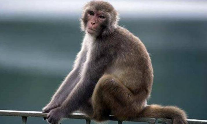 Animal welfare policy: tagging pets, cattle with electronic chips and birth control of monkeys