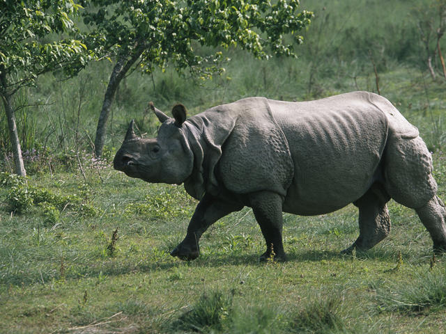 RTI reveals 102 one-horned rhinos killed since 2008